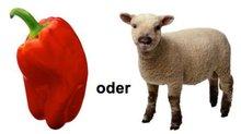 scharf oder Schaf